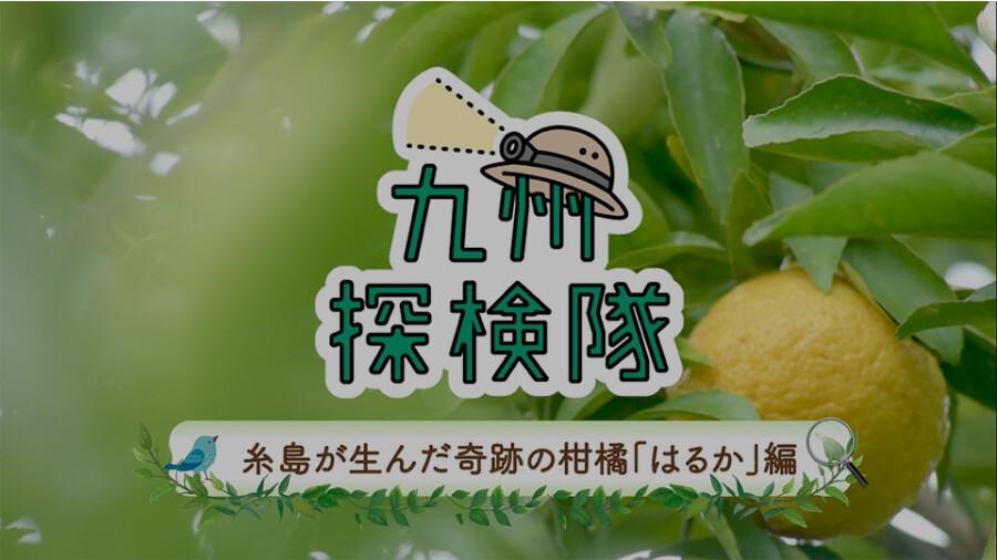 「九州探検隊 糸島が生んだ奇跡の柑橘 はるか」篇